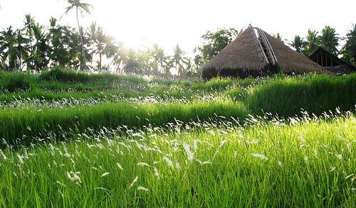 Espacios Cool para Niños: Green School en Bali