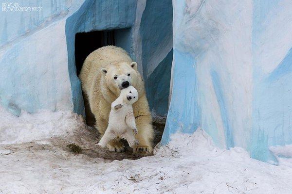 25 fotos de Papás del mundo animal: sus imágenes más tiernas